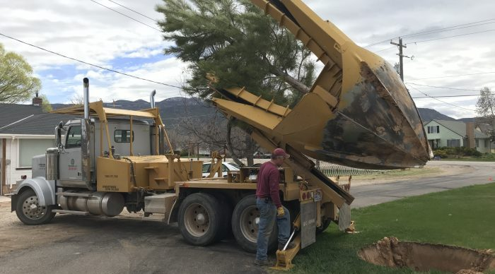 Photo of heavy machinery removing a tree
