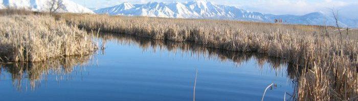 Photo of wetlands in Utah