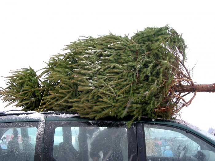 Photo of a cut Christmas tree on top of a car roof